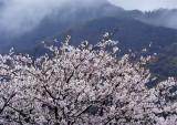 2014年4月祐徳稲荷神社